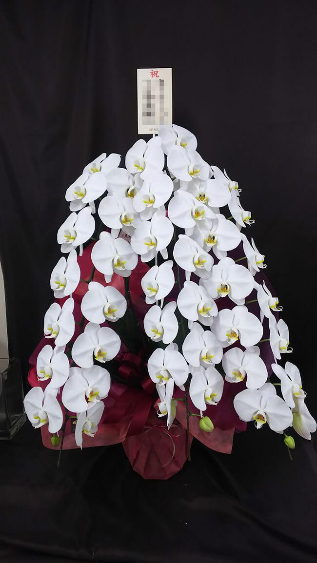 お祝い胡蝶蘭1