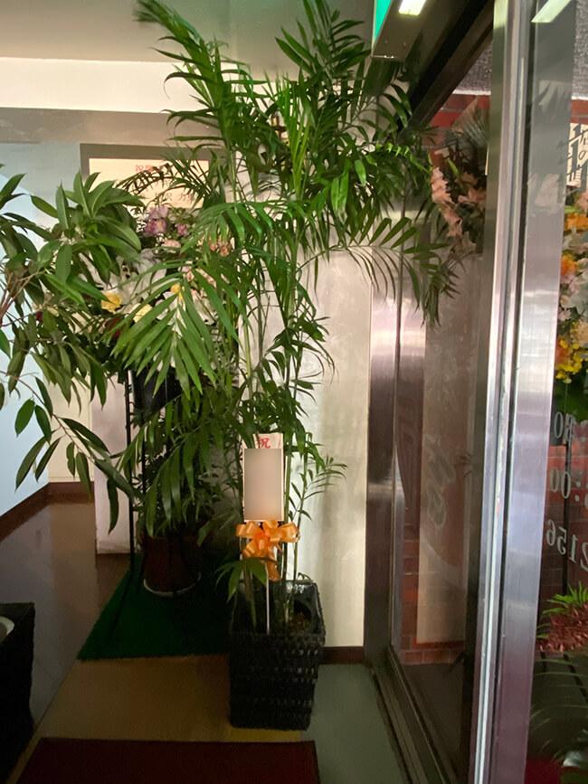 お祝い観葉植物3