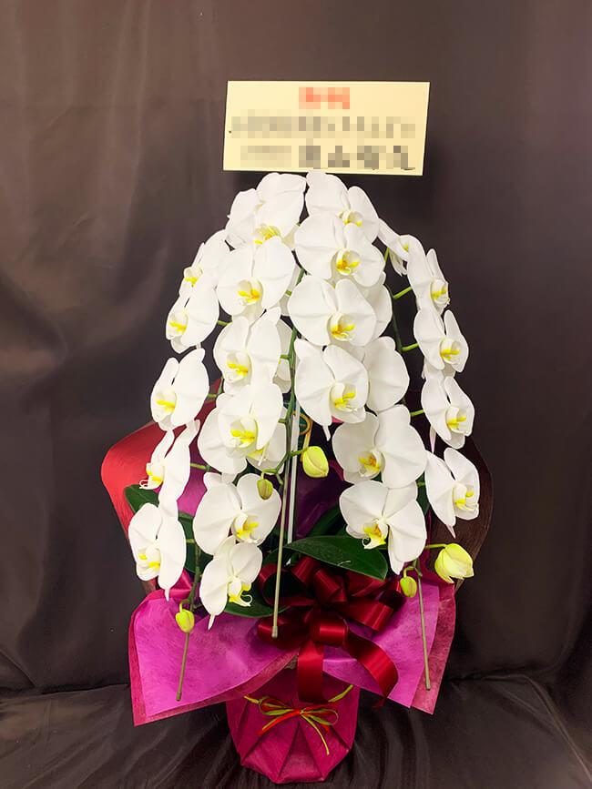 お祝い胡蝶蘭2