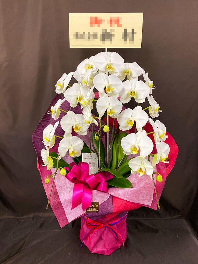 お祝い胡蝶蘭3