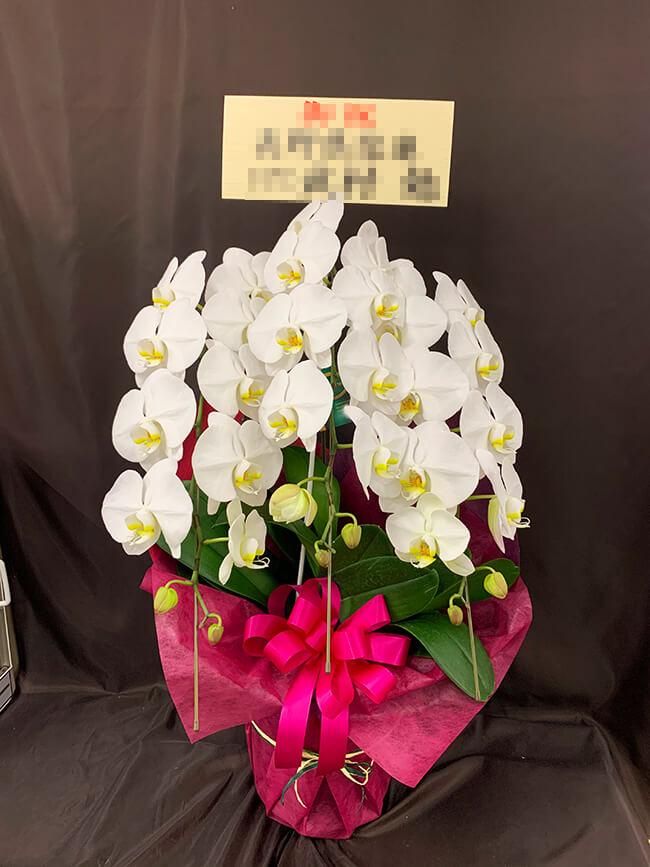 お祝い胡蝶蘭4