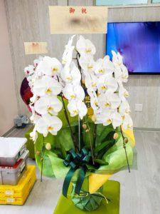【事例紹介】薬局の新規オープンに贈る胡蝶蘭