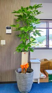 【事例紹介】新築祝いに贈る観葉植物