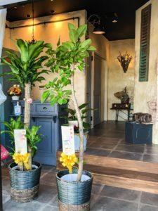 【事例紹介】須坂市のヘアサロンRon様のオープンに贈る観葉植物
