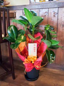 【事例紹介】蕎麦屋OPENに贈る観葉植物